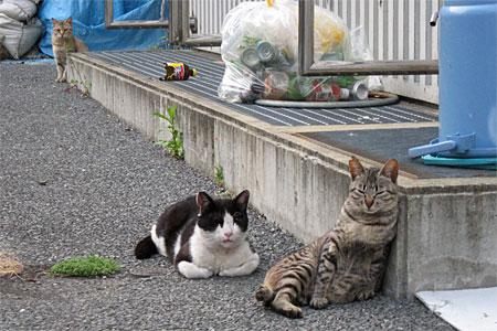 cat_kamigofuku02.jpg