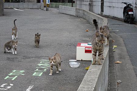 博多区の猫01