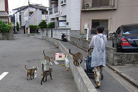 cat_kiyokawa02.jpg