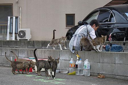 cat_kiyokawa03.jpg