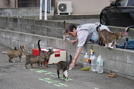 cat_kiyokawa04.jpg