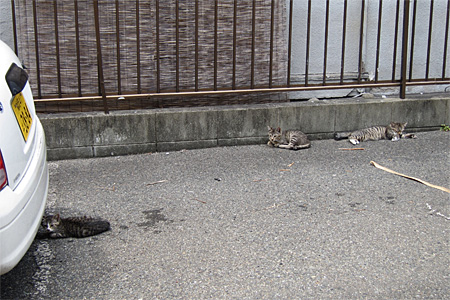 cat_shimogofuku01.jpg