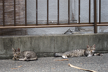 cat_shimogofuku02.jpg