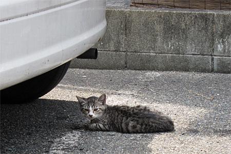 cat_shimogofuku03.jpg