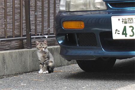 cat_shimogofuku04.jpg