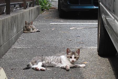 cat_shimogofuku05.jpg