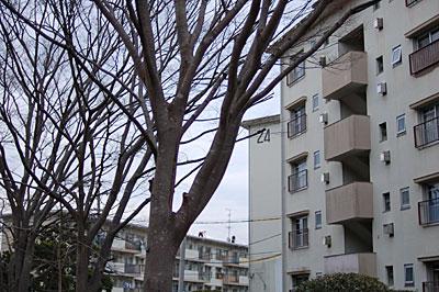 photo37