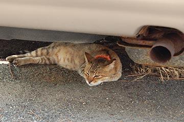 池島の猫02