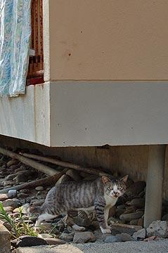 池島の猫03
