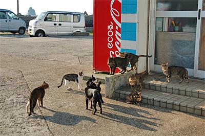 池島の猫11