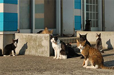 池島の猫12
