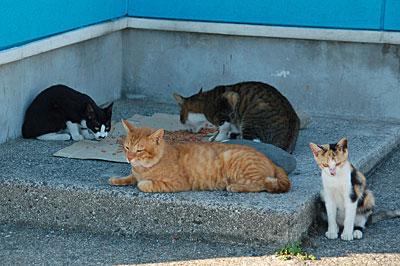 池島の猫13
