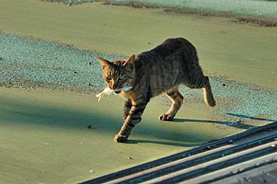 池島の猫14