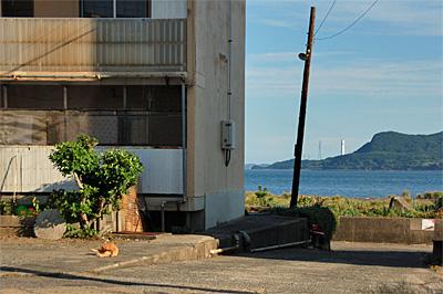 池島の猫17