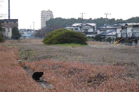 miyajidake2012-037.jpg