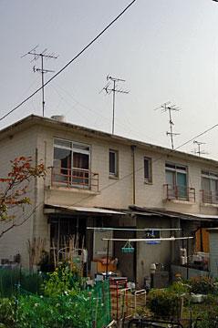oimatsu07.jpg