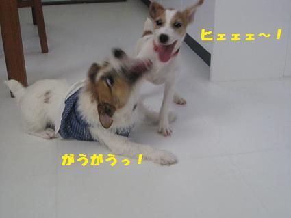 がうがう!