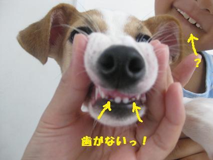 歯がないっ!