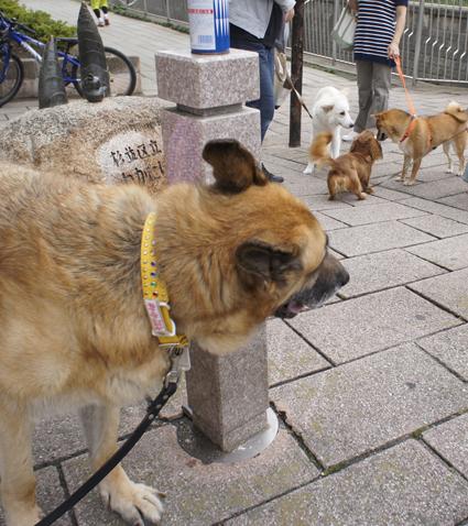 シンディとチビ犬たち