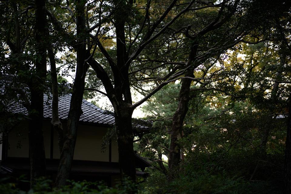 20141012-DSC_3450.jpg