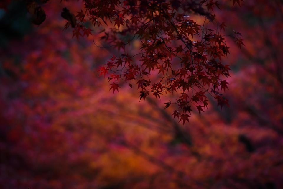 20141122-DSC_6409.jpg
