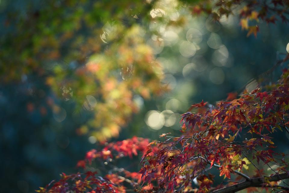 20141122-DSC_6465.jpg