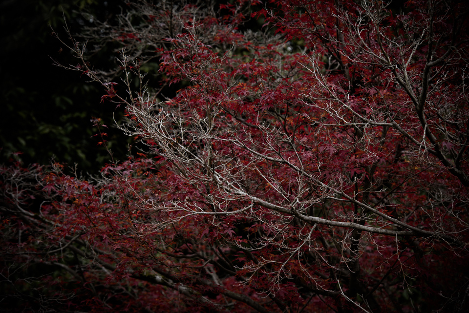 20141130-DSC_6702.jpg