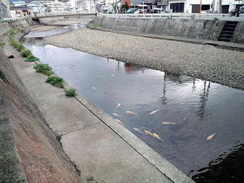 shinkawa130112.jpg
