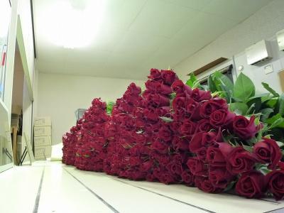 赤バラ サムライ