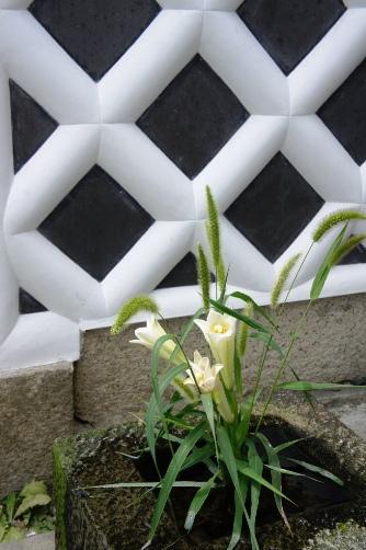 はかり資料館隣の百合の花