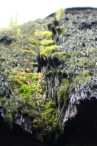 箱根樹木園休憩所⑪
