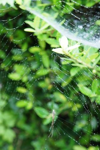 芦ノ湖 蜘蛛の巣