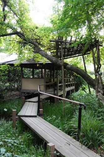 武者小路実篤記念館 庭園の池①