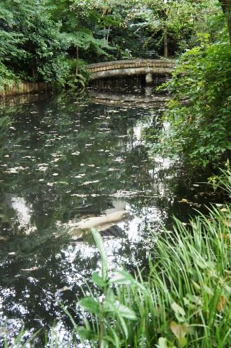 武者小路実篤記念館 庭園の池②