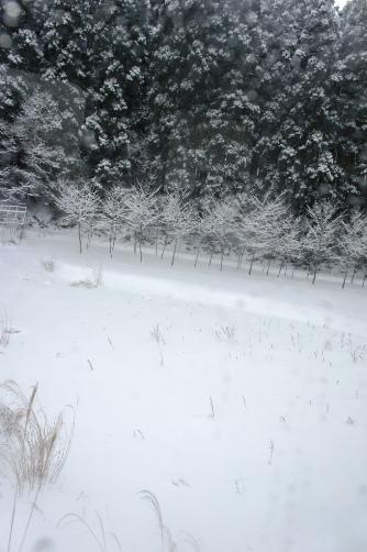 20111223沿線雪景色①