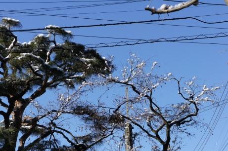 20120124雪の翌朝