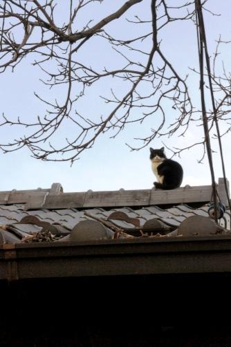 屋根の上のニャン