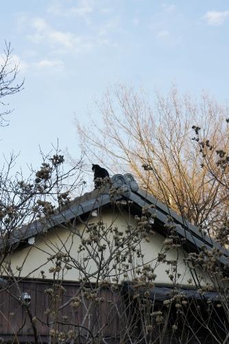 屋根の上に何者か