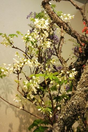 白い藤と古木