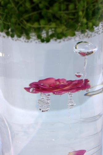 水の中に漂う花