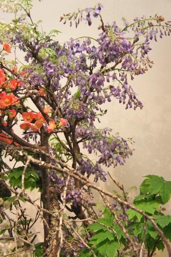 紫の藤と木瓜