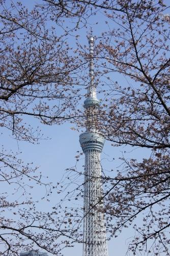 20120402スカイツリーと桜