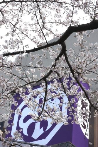 20120404中村座櫓と桜