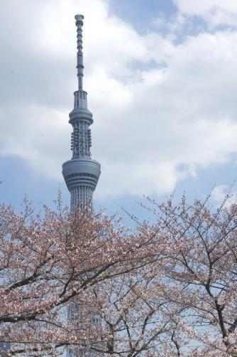 20120404隅田公園からスカイツリー