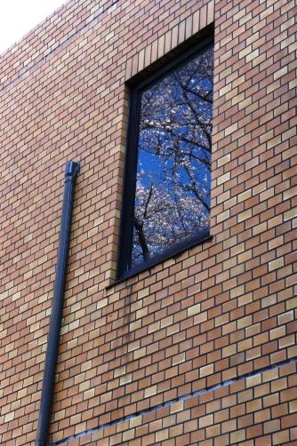 201204窓の中に桜