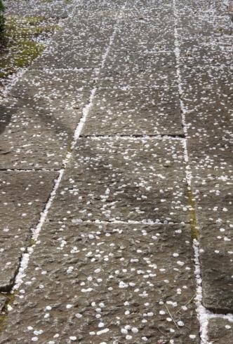 201204近くのお寺石畳