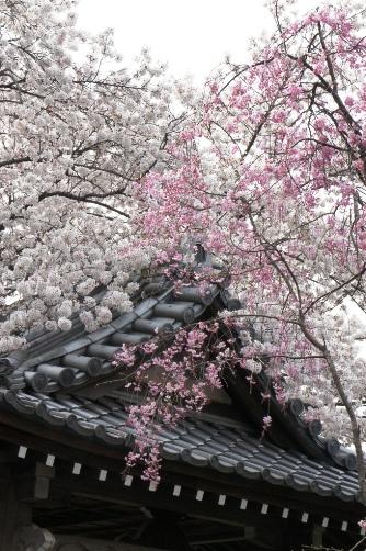 201204近くのお寺⑩