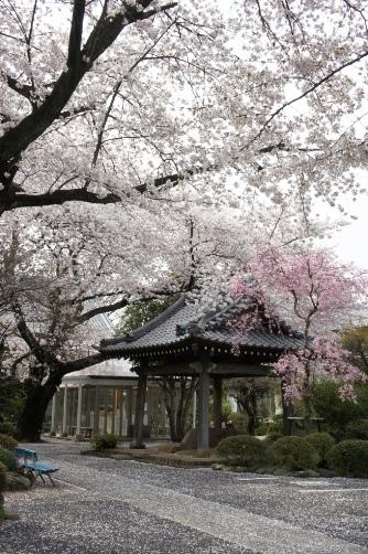 201204近くのお寺⑨