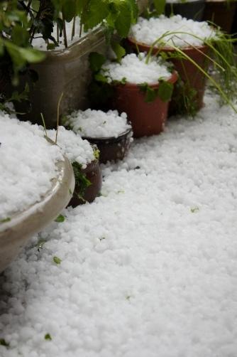 20120506雹が降ったよ③
