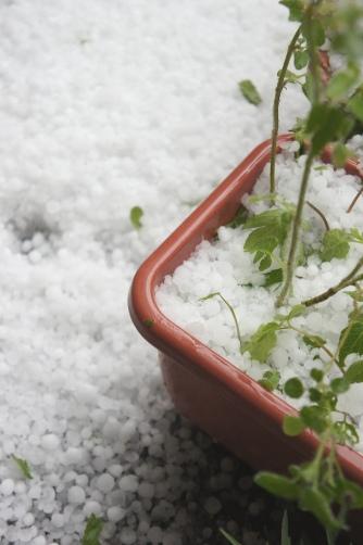 20120506雹が降ったよ②